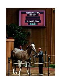 $2.6 million colt, Unbridled's Song - Zing, bred by Aaron U. and Marie D. Jones.