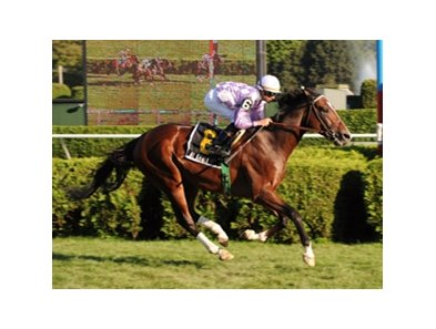 "Al Khali got his first graded stakes victory with a win in the Saranac at Saratoga.<br><a target=""blank"" href=""http://www.bloodhorse.com/horse-racing/photo-store?ref=http%3A%2F%2Fpictopia.com%2Fperl%2Fgal%3Fprovider_id%3D368%26ptp_photo_id%3D8460676%26ref%3Dstory"">Order This Photo</a>"
