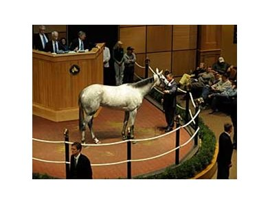 Stardom Bound brings $5.7 million in the Fasig-Tipton sales ring Nov. 2.
