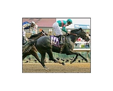 "Kentucky Derby winner Giacomo, retired to stud at Adena Springs. <a target=""blank"" href=""http://www.bloodhorse.com/horse-racing/photo-store?ref=http%3A%2F%2Fpictopia.com%2Fperl%2Fgal%3Fgallery_id%3D6305%26process%3Dgallery%26provider_id%3D368%26ptp_photo_id%3D441219%26sequencenum%3D%26page%3D"">Order This Photo</a>"