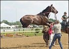Cindy Pierson Dulay's photo of Stephan's Angel leaping in the air while being saddled before the Miss Preakness Stakes was awarded an Eclipse Award.