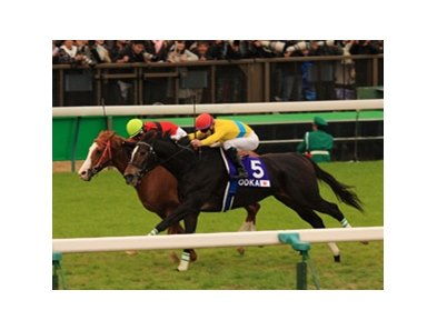 Vodka, Japan's reigning Horse of the Year, barely held on to win the Japan Cup at Tokyo Race Course.