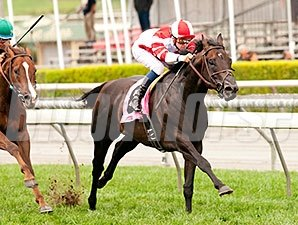 Bal a Bali wins the 2015 American Stakes.