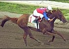 Peace Rules, winning the 2003 Haskell Invitational.