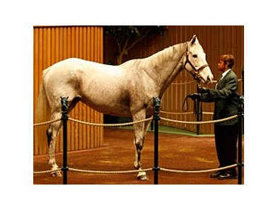 Hip #777; My White Corvette; Tarr Road - Wind Chime by Marfa, dam of Stardom Bound, brought $825,000 during the third session the Keeneland November breeding stock auction in Lexington.