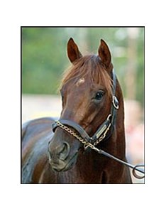 Smarty Jones, has been retired to Three Chimneys Farm.
