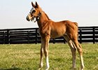 "Rags to Riches' first foal, a filly by Giant's Causeway.<br><a target=""blank"" href=""http://www.bloodhorse.com/horse-racing/photo-store?ref=http%3A%2F%2Fpictopia.com%2Fperl%2Fgal%3Fprovider_id%3D368%26ptp_photo_id%3D7912965%26ref%3Dstory"">Order This Photo</a>"