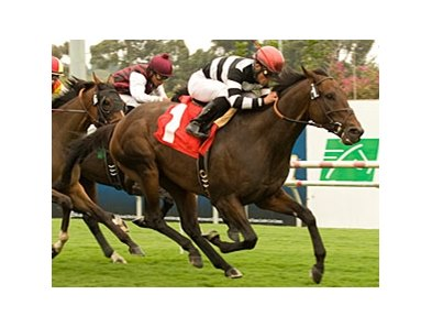 Champ Pegasus