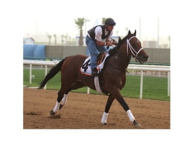 Albertus Maxiumus drew post position 10 for the Dubai World Cup.