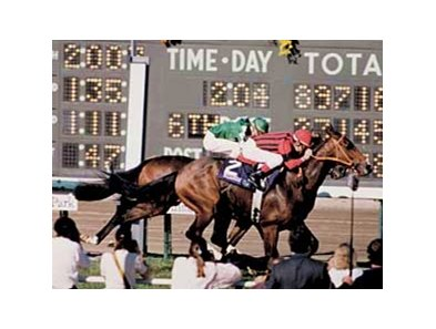 Manila held off Theatrical to win the 1986 Breeders' Cup Turf at Santa Anita.