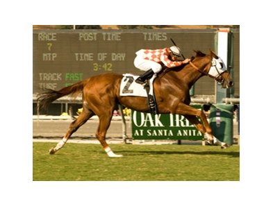 "Presious Passion won the Clement Hirsch at Santa Anita on October 11.<br><a target=""blank"" href=""http://www.bloodhorse.com/horse-racing/photo-store?ref=http%3A%2F%2Fpictopia.com%2Fperl%2Fgal%3Fprovider_id%3D368%26ptp_photo_id%3D8548175%26ref%3Dstory"">Order This Photo</a>"