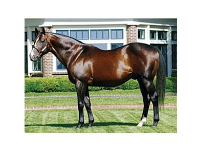 A. P. Indy, leading covering sire at the Keeneland November sale.