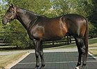Southern Image is one of two Taylor Made stallions that are part of the farm's new breeders' incentive program.