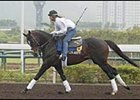 Mister Acpen, American horse on track in Hong Kong.
