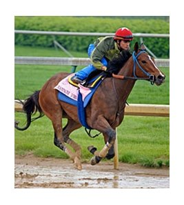 "Champagne d'Oro works at Churchill Downs on April 24.<br><a target=""blank"" href=""http://www.bloodhorse.com/horse-racing/photo-store?ref=http%3A%2F%2Fpictopia.com%2Fperl%2Fgal%3Fprovider_id%3D368%26ptp_photo_id%3D8923495%26ref%3Dstory"">Order This Photo</a>"