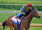 "Champagne d'Oro training at Churchill Downs.<br><a target=""blank"" href=""http://www.bloodhorse.com/horse-racing/photo-store?ref=http%3A%2F%2Fpictopia.com%2Fperl%2Fgal%3Fprovider_id%3D368%26ptp_photo_id%3D8923495%26ref%3Dstory"">Order This Photo</a>"