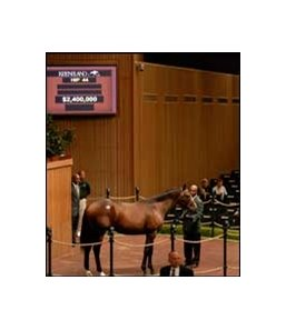 $2.4 million colt, A.P. Indy - Denebola, by Storm Cat.