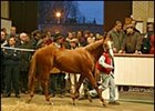 Galileo colt, topped Tattersalls yearling sale Monday.