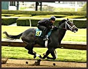 Keeneland Sale Horses Display Speed in Workouts