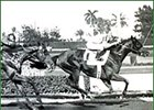 Northern Dancer in the Florida Derby