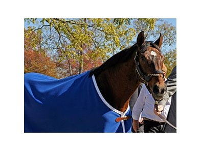 "Alysheba during his arrival at the Kentucky Horse Park in Oct. 2008. <br><a target=""blank"" href=""http://www.bloodhorse.com/horse-racing/photo-store?ref=http%3A%2F%2Fgallery.pictopia.com%2Fbloodhorse%2Fgallery%2FS618050%2Fphoto%2F6546991%2F%3Fo%3D11"">Order This Photo</a>"
