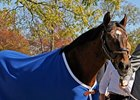 "Alysheba arrives at the Kentucky Horse Park on October 31, 2008.<br><a target=""blank"" href=""http://www.bloodhorse.com/horse-racing/photo-store?ref=http%3A%2F%2Fpictopia.com%2Fperl%2Fgal%3Fprovider_id%3D368%26ptp_photo_id%3D6546991%26ref%3Dstory"">Order This Photo</a>"