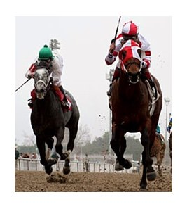 Friesan Fire won the Louisiana Handicap in January.