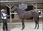 Chief Seattle colt, brought top price during first session of Midlantic sale.