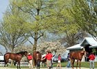 Keeneland April 2-Year-Old in training sale.