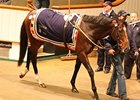 Cat Junior brought 220,000 guineas to lead the second session of the Tattersalls Autumn horses in training sale.