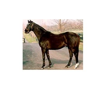 Deceased stallion Halo, at Stone Farm in 1998.