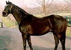 Halo, the two-time leading sire who died Tuesday, pictured at Stone Farm in 1998.