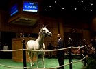 Careless Jewel in the Fasig-Tipton November sale.
