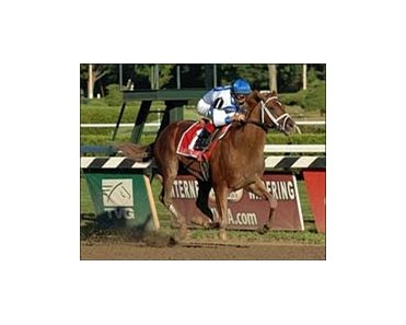 "Woodward winner Lawyer Ron will face Preakness winner Curlin in the Jockey Club Gold Cup.<br><a target=""blank"" href=""http://www.bloodhorse.com/horse-racing/photo-store?ref=http%3A%2F%2Fpictopia.com%2Fperl%2Fgal%3Fprovider_id%3D368%26ptp_photo_id%3D2161294%26ref%3Dstory"">Order This Photo</a>"