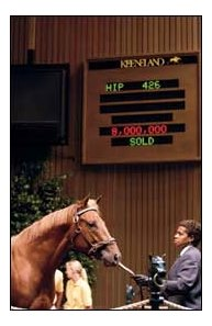 Mr. Sekiguchi sold for $8 million at the 2004 Keeneland September yearling sale.