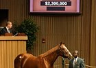 Weekend Strike, hip 41, was sold at the Keeneland November Sale for $2.3 Million.