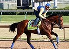American Pharoah galloped 1 1/4 miles on the Churchill Downs main track on June 13.