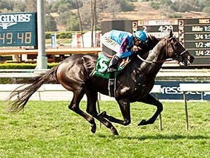 Bolo streaks to the win on the turf at Santa Anita.