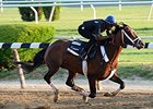 Tale of Verve, Mubtaahij Breeze for Belmont