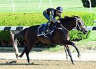 Mubtaahij Races For 'Other' Sheikh in Belmont