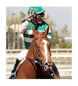 Stellar Wind wins the 2015 Summertime Oaks.