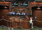 Hip 78, a colt by Scat Daddy, brought a June auction record price of $575,000.