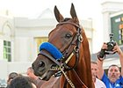 American Pharoah at Churchill Downs.