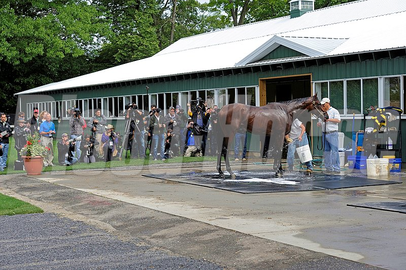 Caption:  American Pharaoh and media while getting bath at Belmont Park on June 2, 2015. 