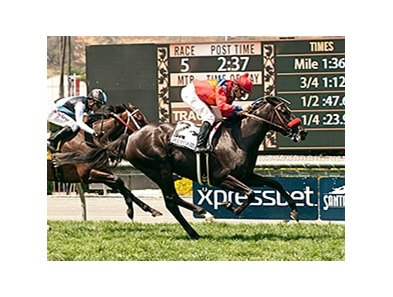 Spanish Queen won 2015 American Oaks.