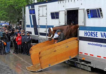 Caption:  American Pharaoh arrives at Belmont Park on June 2, 2015. Jimmy Barnes leads the colt off the van as media document the event.