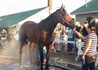 American Pharoah Bath June 12, 2015