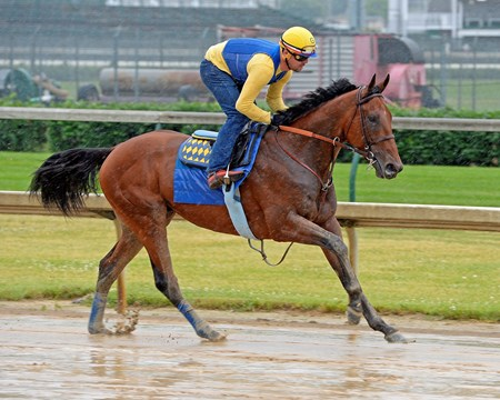 Caption:  American Pharaoh with Jorge Alvarez up gallops over a sloppy track at Churchill Downs on May 24, 2015, Memorial Day.