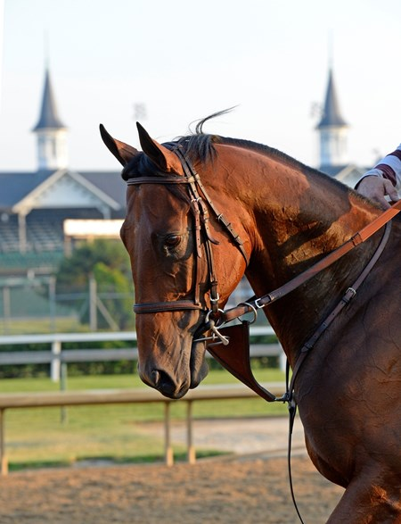American Pharaoh visits the track June 12, for the first time at Churchill Downs since winning the Belmont Stakes and Triple Crown.