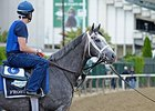 "Frosted at Belmont Park<br><a target=""blank"" href=""http://photos.bloodhorse.com/TripleCrown/2015-Triple-Crown/Belmont-Stakes-147/i-PHqWbjS"">Order This Photo</a>"